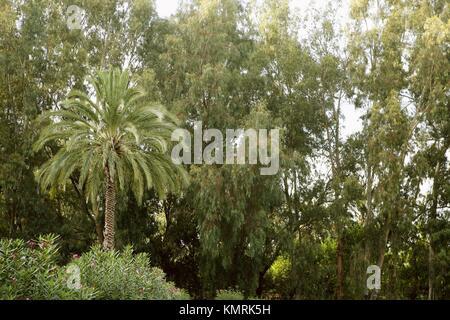 Green nature avec palmier et eucalyptus
