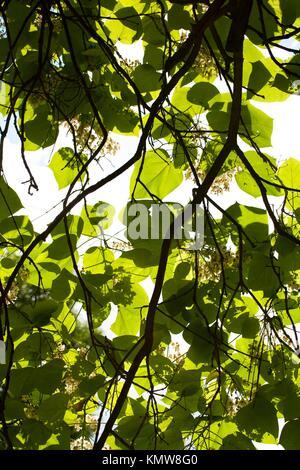 Lush green au soleil avec vue sur la silhouette des arbres dans la direction générale Banque D'Images
