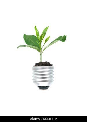 Une ampoule électrique isolé sur fond blanc Banque D'Images