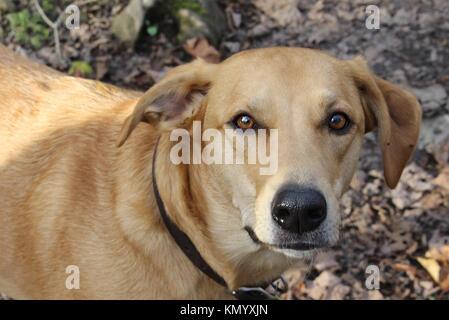 Chevy, l'aventure chien. Banque D'Images