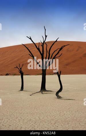 Arbres morts dans le désert de Namibie, Deadvlei. Banque D'Images