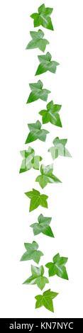 Les feuilles de vigne verte décor marge isolé sur blanc. Banque D'Images