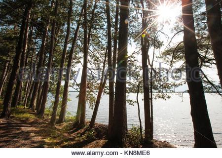 Un brillant sunstar est créé en fin d'après-midi sur le lac Trout, près de Boulder Junction, Wisconsin en comté Banque D'Images
