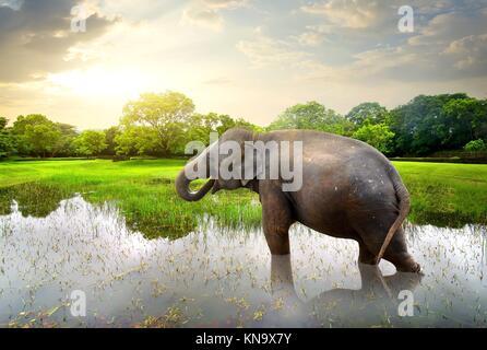 L'éléphant, le bain dans le lac près de vert des arbres. Banque D'Images