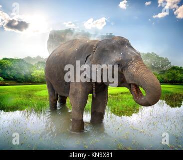 Éléphant dans un étang près de montagne de Sigiriya. Banque D'Images