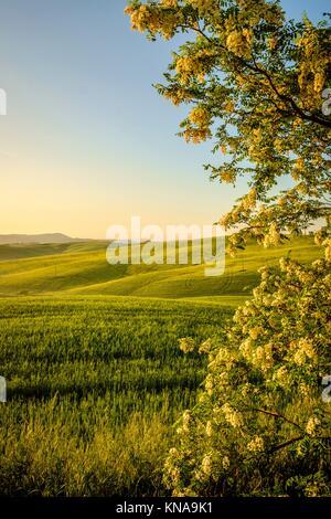 Val d'Orcia en Toscane en Italie, province de l'Europe. Banque D'Images