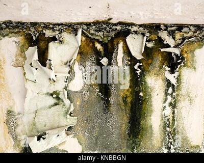 Vieux Mur peel peinture causée par l'eau du toit.Green lichen collage sur le mur Banque D'Images