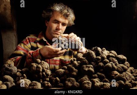 La truffe noire du Tricastin dans la Drôme, France. Gilles Ayme Truffe le brossage