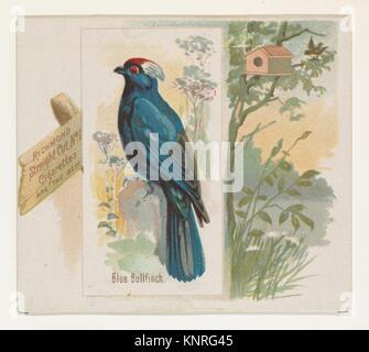 Bouvreuil bleu, du chant des oiseaux de la série mondiale (N42) pour Allen & Ginter Cigarettes. Editeur: Publié Banque D'Images