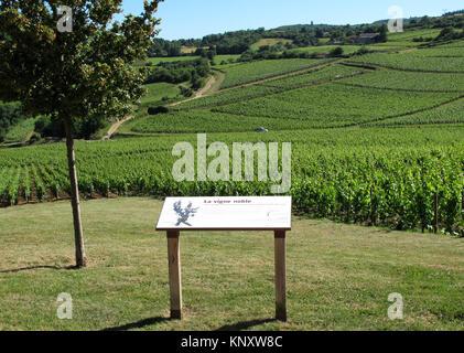 Vignes de l'Appellation Pouilly-Fuissé au pied de la roche de Solutré, Solutré-Pouilly, Saône-et-Loire, Bourgogne Banque D'Images