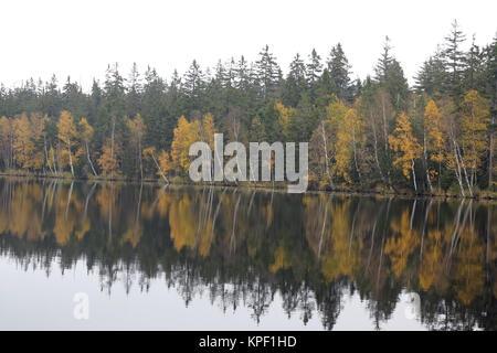 Les arbres sur la rive du lac à l'automne