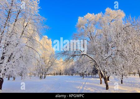 Beauté du Paysage d'hiver dans le parc à neige journée ensoleillée. Wonderland avec blanc de la neige et le givre couvrait les arbres et arbustes à la lumière du soleil - belle winte