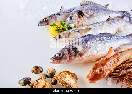 Angle de vue élevé encore de la vie des poissons, crustacés et fruits de mer organisées dans de beaux Affichage Banque D'Images