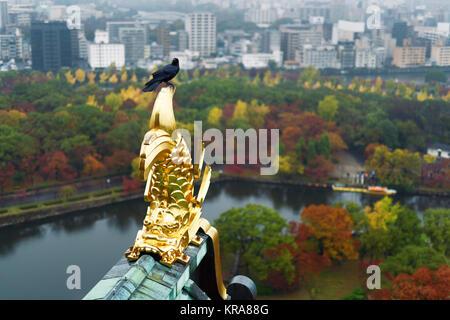 Raven assis sur toit Décoration dorée et du château d'Osaka avec antenne automne paysage ville d'Osaka et du Parc Banque D'Images