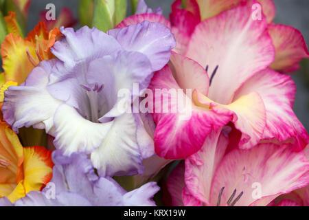 Bouquet coloré de glaïeul