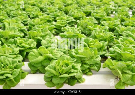 Serre commerciale culture hors-sol de légumes