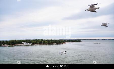 Voir ci-dessus des peu de vol de mouettes à green land Banque D'Images