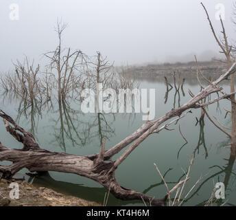 Grand Trunk dans le Grand Lac Blanc avec des arbres en arrière-plan dans le brouillard Banque D'Images