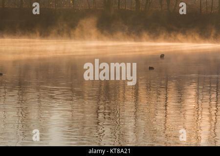 Abtskücher étang dans la brume matinale.