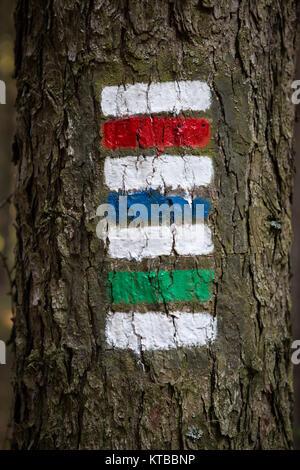 Les panneaux colorés pour la randonnée sur l'écorce d'un arbre Banque D'Images