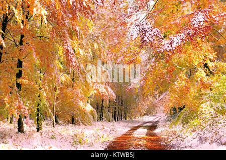 Première neige en forêt avec quelques cours et de jaune et orange feuilles des arbres Banque D'Images