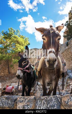 Taxi de l'Âne - les ânes utilisés pour transporter les touristes à l'Acropole de Lindos (Rhodes, Grèce) Banque D'Images