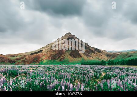 Paysage typique de l'Islande avec des montagnes Banque D'Images