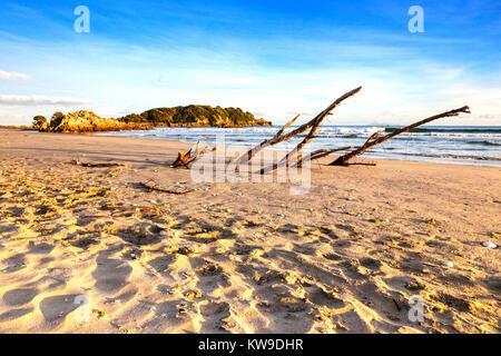 Beach, Mount Maunganui, Bay of Plenty, Nouvelle-Zélande. C'est un très populaire beach resort de l'île du nord de Banque D'Images