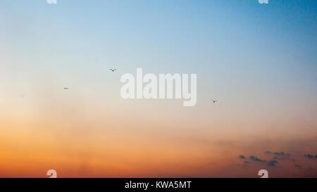 Trois mouettes dans le ciel sur le coucher du soleil Banque D'Images