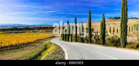Paysage d'automne impressionnant,avec vue sur vignes et de cyprès,Toscane,Italie. Banque D'Images
