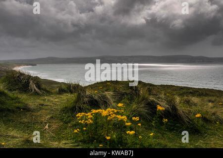 Vue sur la mer depuis la falaise herbeuse dans une baie à la plage de rochers sur la côte de Cornouailles, Cornwall, Banque D'Images