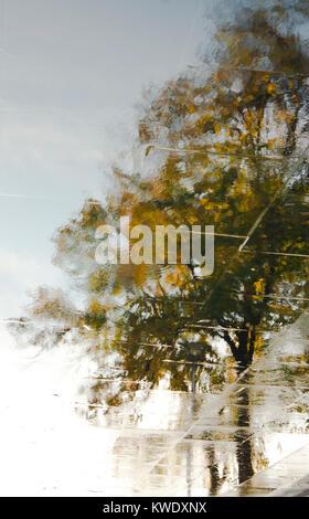 Réflexion floue des arbres et le ciel dans une flaque sur le trottoir de la ville Banque D'Images