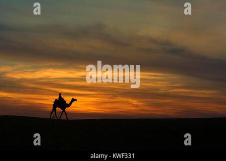 Silhouette d'un chameau sur les dunes de sable Banque D'Images