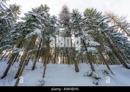 Paysage d'hiver majestueux avec des arbres couverts de neige. Scène d'hiver spectaculaire Banque D'Images