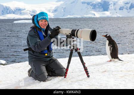 Photographe avec immense téléobjectif à capturer des images de manchots à longue queue; Pygoscelis papua; Rongé; Banque D'Images