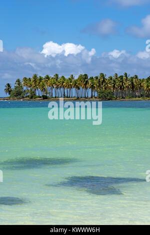 Les cocotiers sur la plage des Caraïbes Banque D'Images