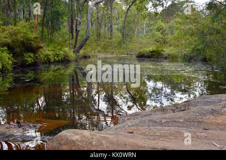 Blackdown Tableland National Park, Queensland, Australie Banque D'Images
