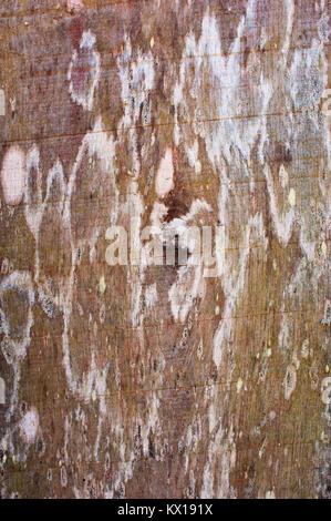 Image plein cadre d'une planche de bois, idéal pour une utilisation comme arrière-plan - John Gollop Banque D'Images