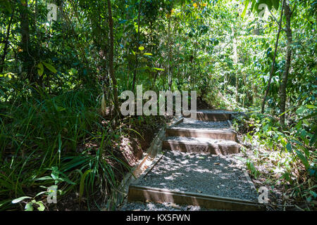 Un chemin de randonnée, parc national Manuel Antonio, Costa Rica Banque D'Images