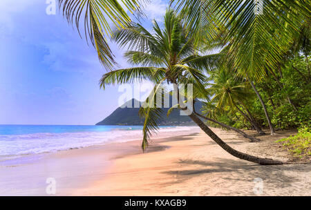 Les palmiers sur la plage des Caraïbes, la Martinique.