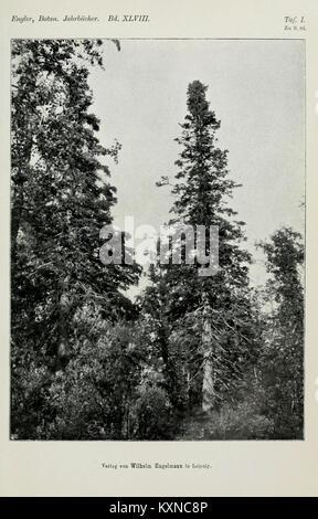 Botanische Jahrbücher und Systematik fourrure, Pflanzengeschichte Pflanzengeographie BHL5146890 Banque D'Images