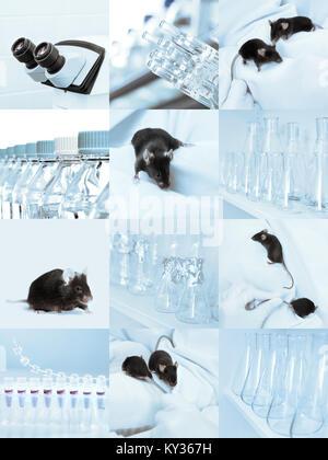 Les souris expérimentales noir, microscope et verrerie de laboratoire, ensemble d'sqiare images teintées Banque D'Images