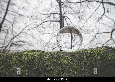 Glass orb sur une grosse branche recouverte de mousse verte à l'automne dans une forêt avec des arbres barenaked Banque D'Images