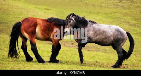 Paysage panoramique avec deux chevaux dans les prés verts
