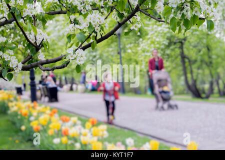 Balade des gens heureux, des familles avec enfants dans le parc avec des tulipes, fleurs de Sakura, cerisier, Apple Banque D'Images