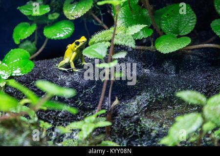 Close-up de grenouille sur rock au milieu de plantes Banque D'Images