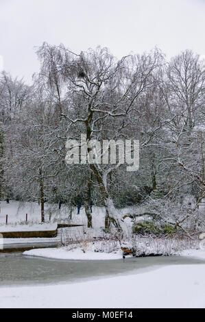 Glasgow, Ecosse, Royaume-Uni. 21 janvier 2018. Météo France: Les arbres couverts de neige et de l'étang est gelé comme une couche de neige couvre Glasgow. Credit: Skully/Alamy Live News