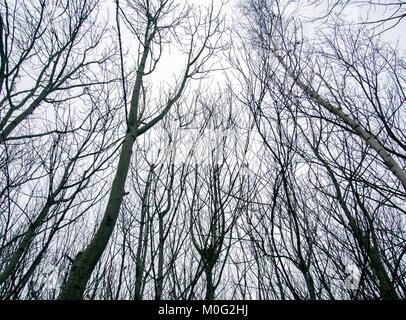 GLASGOW, ÉCOSSE - 21 janvier 2018: arbres au parc local pendant la saison d'hiver dans la région de Rutherglen, Banque D'Images