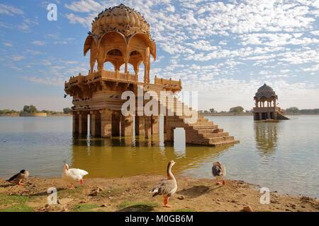 Avis de chhatris à Gadi Sagar Lake avec des bernaches dans l'avant-plan, Jaisalmer, Rajasthan, India Banque D'Images