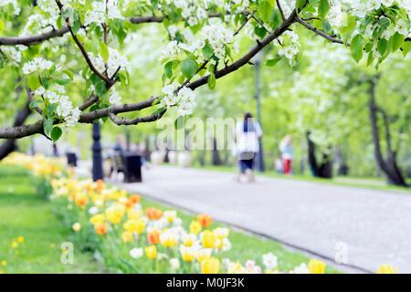 Balade des gens heureux, des familles avec enfants dans le parc, les tulipes et les fleurs de Sakura, cerisier, Banque D'Images